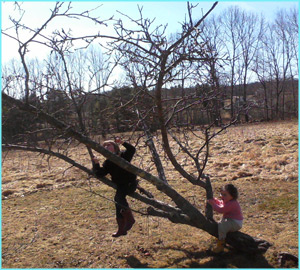 two children climbing a small apple tree