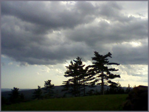 2 pine trees against a background of storm clouds